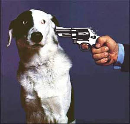 Отстреливать нельзя стерилизовать
