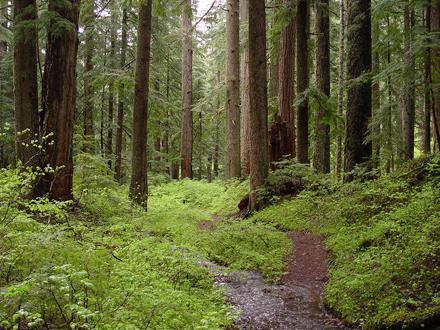 ЕС хочет защитить леса Азербайджана