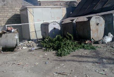 На мусорных свалках Баку