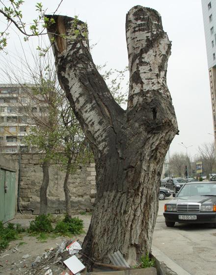 """""""Зеленый"""" геноцид продолжается"""