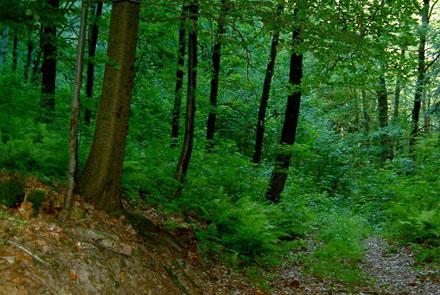 Охрана лесов для будущих поколений,