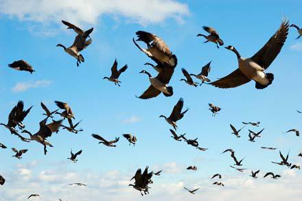 Птицы - вне границ!