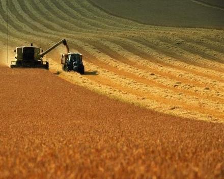 Создаются государственные резервы зерна